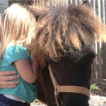 Michelangelo the Miniature Therapy Horse @ Kenilworth Public Library | Kenilworth | New Jersey | United States